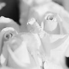 Black & White roses No1 by Marko  Gligorov