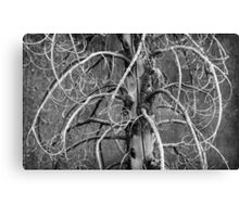 Dead Fir Tree Canvas Print