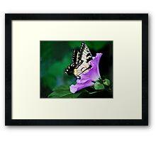 Knee-deep In Nectar... Framed Print