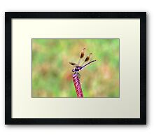 Magic in god's smallest creations Framed Print