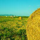 harvest by Yannis-Tsif