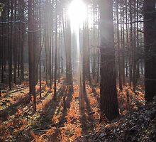 Woodland in Springtime by YellowCanProd