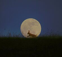 Moon Gazing by Steve Adams