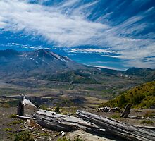 Mt St Helens Fallen Tree by Brian Harig