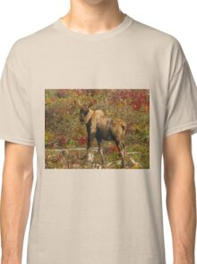 Maine Bull Moose in the fall Classic T-Shirt
