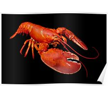 Large Maine Lobster Poster