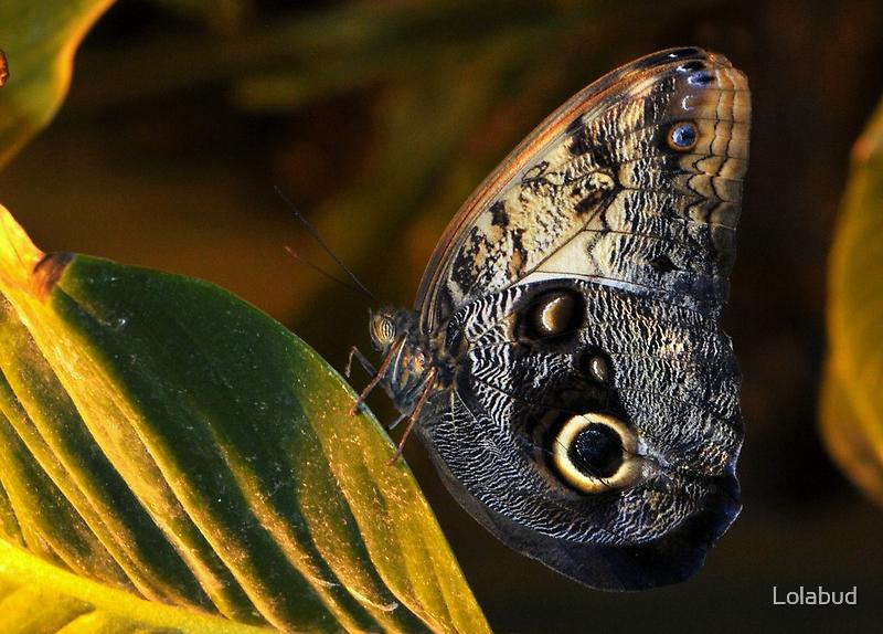 Butterfly by Lolabud