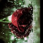 Rose in the Rain by SimpsonBrothers