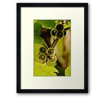Fruit and thorns Framed Print