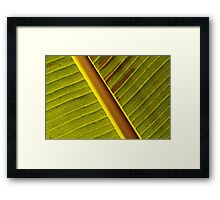 Leaf in red & green Framed Print