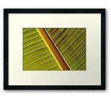 Leaf in red & green Framed Print