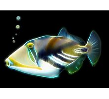 Picasso Trigger Fish for Cris Photographic Print