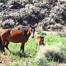Mare And Foal Mustang by marilyn diaz