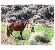 Mare And Foal Mustang Poster