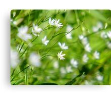 White Flowers Have Fun Canvas Print