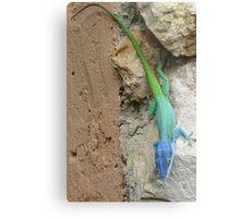 Multi colored lizard. Metal Print