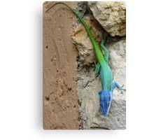 Multi colored lizard. Canvas Print
