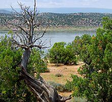 Abiquiu Lake, New Mexico #2 by Vicki Pelham
