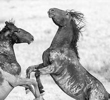 West Desert Mustangs by Robbie Knight