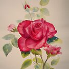 Red rose by Beatrice Cloake