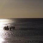 Reef Collectors on Heron Island, Great Barrier Reef by deanobrien