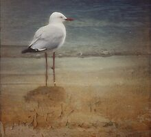 lone seagull by © Karin Taylor