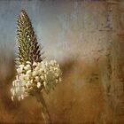 little flower head by © Karin  Taylor