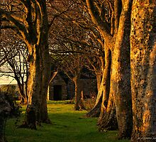 church yard  by andystarr1