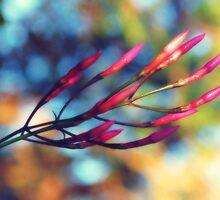 pink nostalgia by © Karin  Taylor