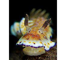 Nudibranch - Chromodoris Collingwoodi Photographic Print