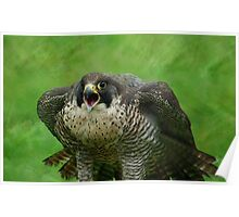 The Peregrine Falcon  Poster