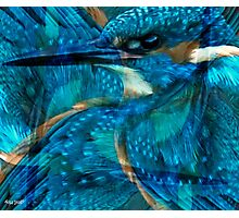 Designs Inspired By Nature: Kingfisher Photographic Print