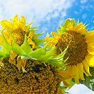 sunsilf by BellatrixBlack