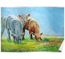 Cows Calves Grazing Poster
