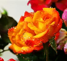 Tropicana Rose by ThinkPics