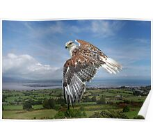 The Red-tailed Hawk over Dungarvin Bay  Poster