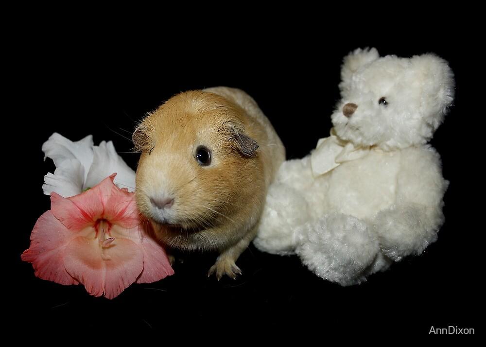 Honey the Guinea Pig by AnnDixon