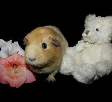 Honey the Guinea Pig by AnnDixon