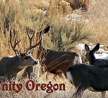 Muley Antics by © Betty E Duncan ~ Blue Mountain Blessings Photography