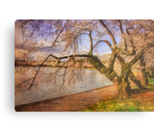 At The The Cherry Blossom Festival Metal Print
