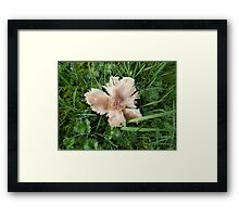 Toadstool on the Towans Framed Print