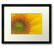 Fibonacci Sequence Framed Print
