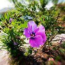 The purple flower by Gerard Rotse