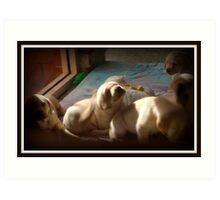 Desirable, Adorable Puppies Art Print