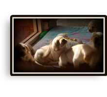 Desirable, Adorable Puppies Canvas Print