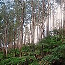 Yarra Ranges National Park by Janette Rodgers