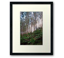 Yarra Ranges National Park Framed Print