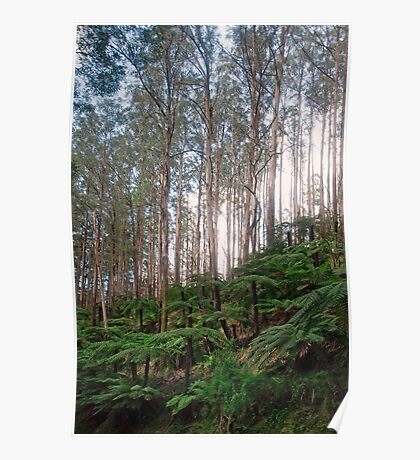 Yarra Ranges National Park Poster