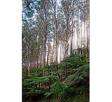 Yarra Ranges National Park Photographic Print