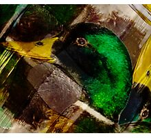 Designs Inspired By Nature: Wild Mallard Photographic Print